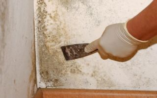 Как убрать запах плесени со стен в доме