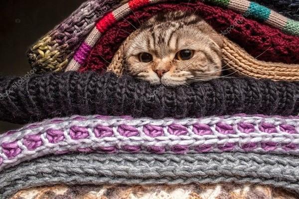 Кошка под шерстяными вещами